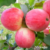 Дерево-Сад яблоня Мельба, Орлинка